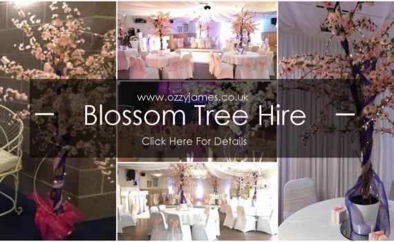 cherry blossom trees to hire
